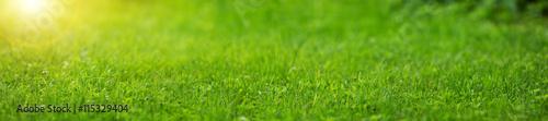 Fototapeta premium Świeże zielone tło trawy w słoneczny letni dzień