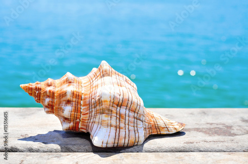 Leinwand Poster conch on a wooden pier