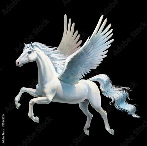 Stampa su Tela Pegasus