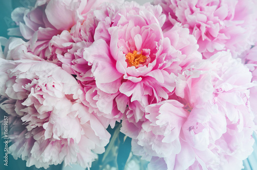 Fresh bunch of pink peonies peony roses flowers, white with blue effect shine. Pastel floral wallpaper, background from flower petals. Trendy color. Bloom love concept. Card, text, copy space.