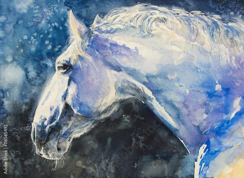 Malowanie portretu konia lipizzaner. Zdjęcie wykonane akwarelami