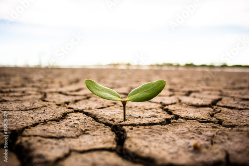 Carta da parati Living with tree drought, Reborn tree, crack ground.