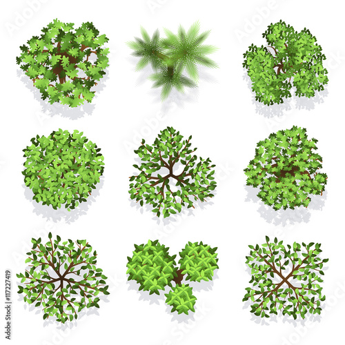 Photo Trees top view vector set for landscape design and map