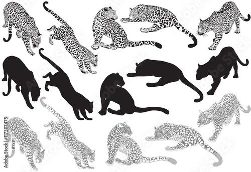 Carta da parati Set of leopard on a white background