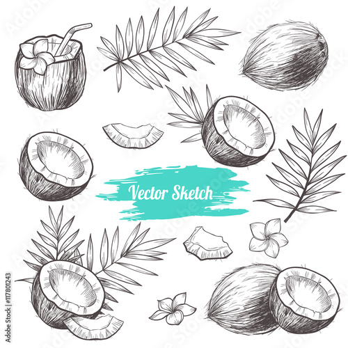 Vector coconut hand drawn sketch with palm leaf.  Sketch vector tropical food illustration. Vintage style Wall mural
