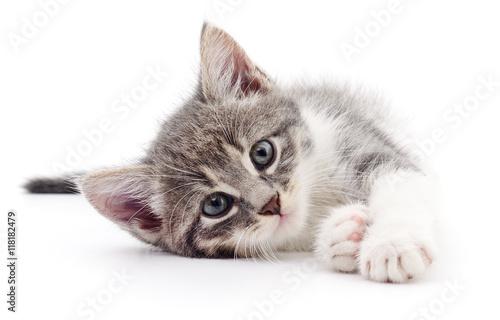 Photo Kitten on white background.