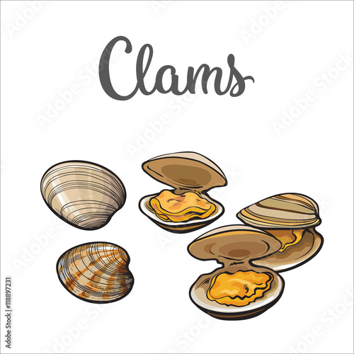 Vászonkép Clams, mussels, seafood, sketch style vector illustration isolated on white background