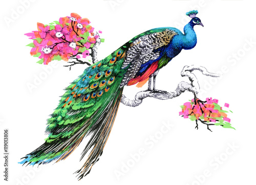 Photo Watercolor drawing peacock on blooming tree branch on white background