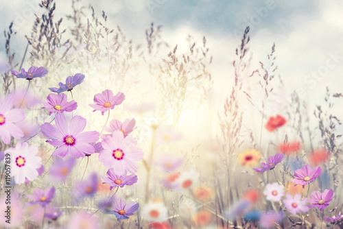 Fototapeta wild flowers at sunset