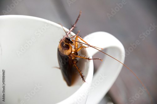 Close up cockroach in mouth white cup