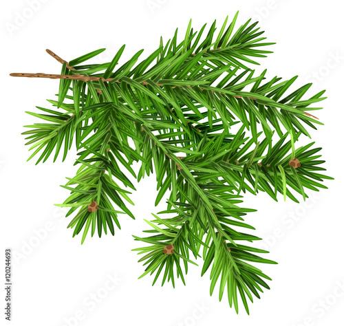 Fotografie, Obraz Green fluffy fir branch