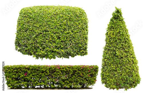 Fotografia, Obraz bush on white background