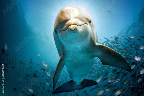 Foto dolphin underwater on reef close coming to you