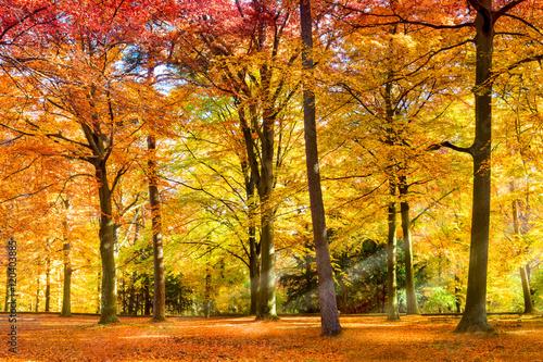Forêt ensoleillée en automne Poster Mural XXL
