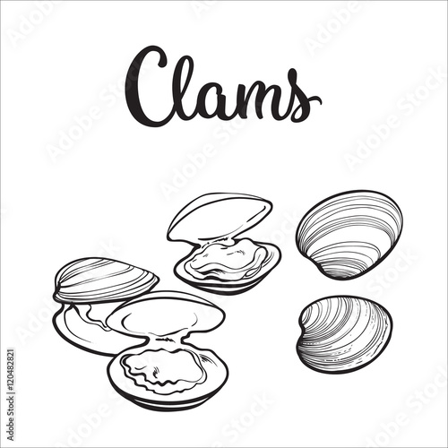 Clams, mussels, seafood, sketch style vector illustration isolated on white background Tapéta, Fotótapéta
