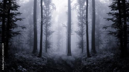 dark forest at twilight