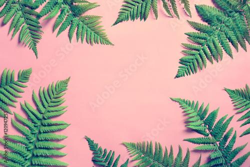 Carta da parati Summer tropical background, fern leaves
