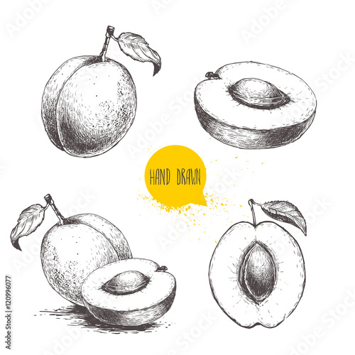Hand drawn ripe apricots set isolated on white background Fotobehang