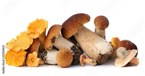 Wild Foraged Mushroom selection isolated on white background, with shadow Fototapeta