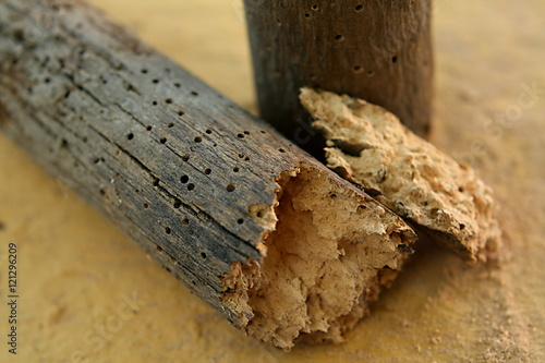 Old crumbled piece of wood decayed by woodworms
