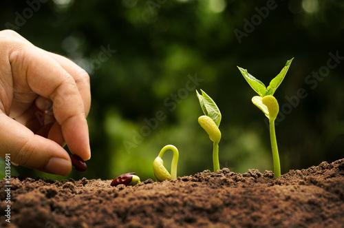 Rolnictwo i siać Nasiona uprawy koncepcja krok Fototapeta