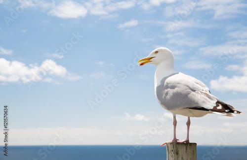 Photo seagull over sea and blue sky