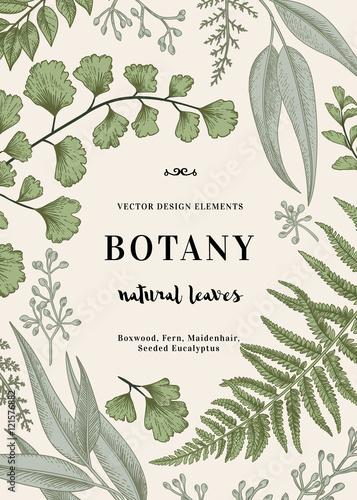 Cuadros en Lienzo Botanical illustration with leaves.