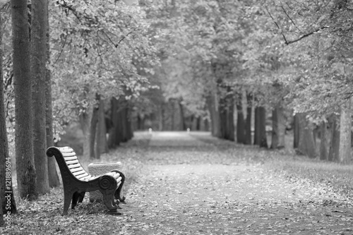 Autumn road in the park with a bench - black and white