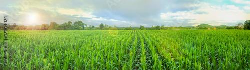 Fotografía corn field and blue sky
