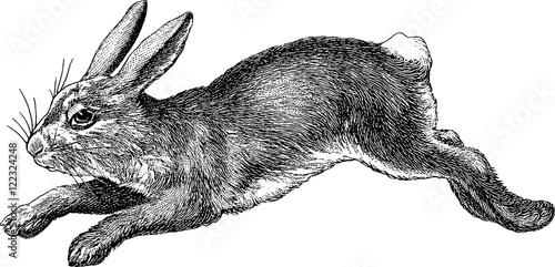 Wallpaper Mural Vintage image rabbit