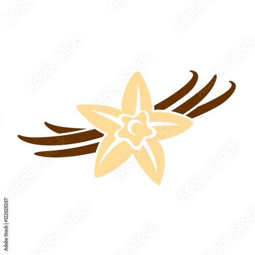 Fotografia Vanilla flower with pods color silhouette