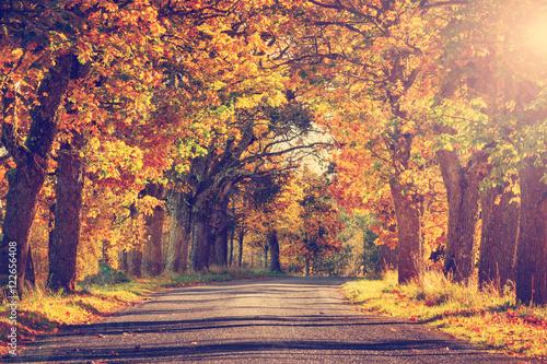 Fotografija asphalt road with beautiful trees on the sides in autumn
