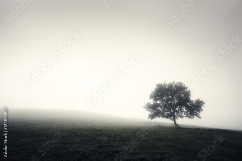 lonely foggy tree in black and white