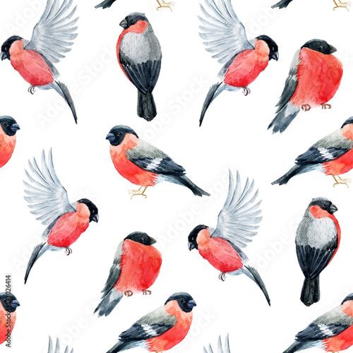 Watercolor bullfinch bird pattern Fototapet