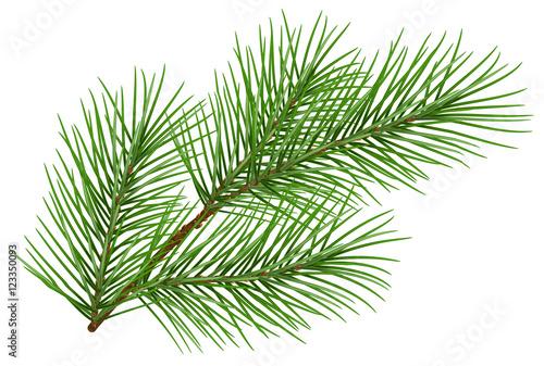 Stampa su Tela Green fluffy pine branch symbol of new year