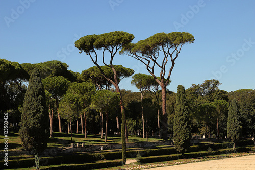 junipers in the garden of a summer sunny day