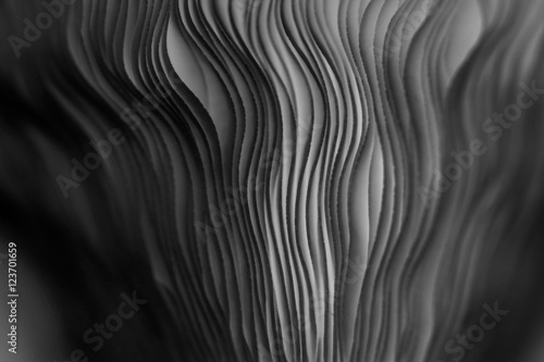 Fotografia Close up of gills of a mushroom for abstract background