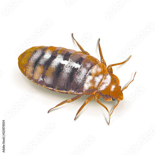 Foto A bed bug isolated on white