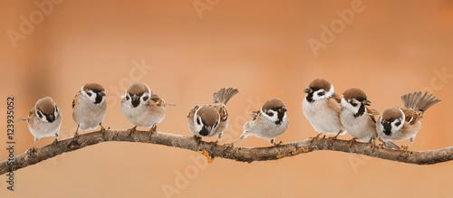 Fototapeta premium dużo małych zabawnych ptaków siedzących na gałęzi w słoneczną pogodę