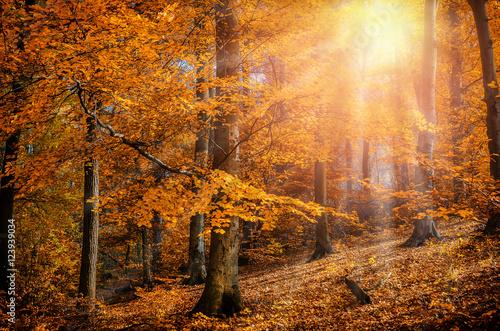 Rays of the sun autumn trees