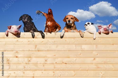 Obraz na plátně Gruppe von Haustieren schaut über eine Holzwand, Werbung - Banner