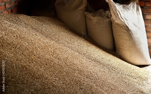 Photo Wheat grains in sacks at mill storage