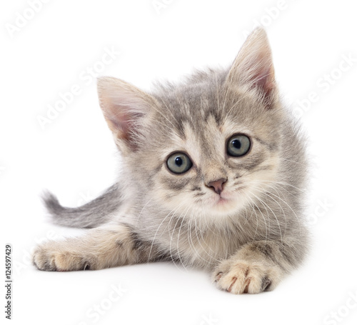 Fototapeta premium Mały szary kotek.