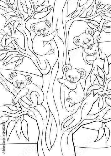 Fototapeta premium Kolorowanki. Cztery małe koale siedzą na drzewie.