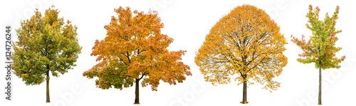 Autumn trees isolated white background. Oak, maple, linden