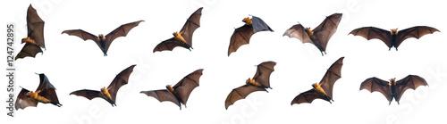 Leinwand Poster Bats flying on white background