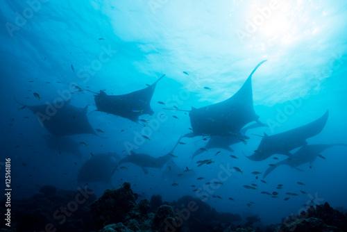 Photo Silhouette of manta ray