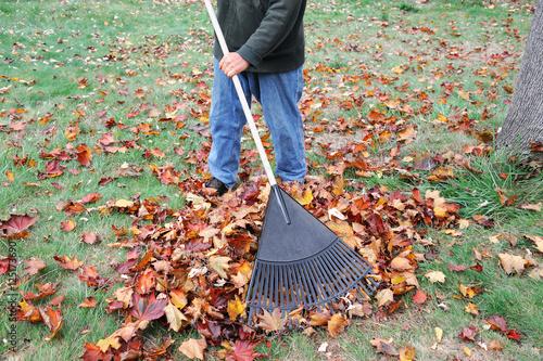 man working in the yard to clean fallen leaves by fan rake Fototapeta