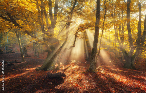 Autumn forest in fog with sun rays. Magical old trees at sunrise. Colorful landscape with foggy forest, yellow sunlight, orange foliage at sunrise. Fairy forest in autumn. Fall woods. Enchanted trees