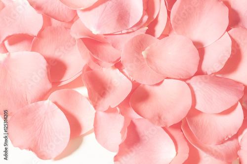 Wallpaper Mural Rose petals